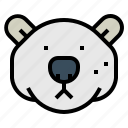 animal, arctic, bear, head, polar