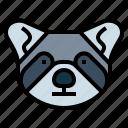 animal, head, mammal, raccoon, wildlife