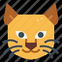 animal, cat, kitty, mammal, pet