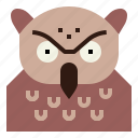 animal, bird, head, owl, wildlife