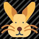 animal, bunny, mammal, pet, rabbit
