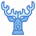 animal, deer, horn, stag, wildlife