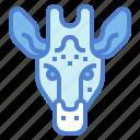 animal, giraffe, mammal, wildlife