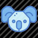 animal, bear, head, koala, wildlife