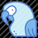animal, bird, parrot, poultry, wildlife