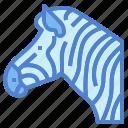 animal, mamma, wildlife, zebra