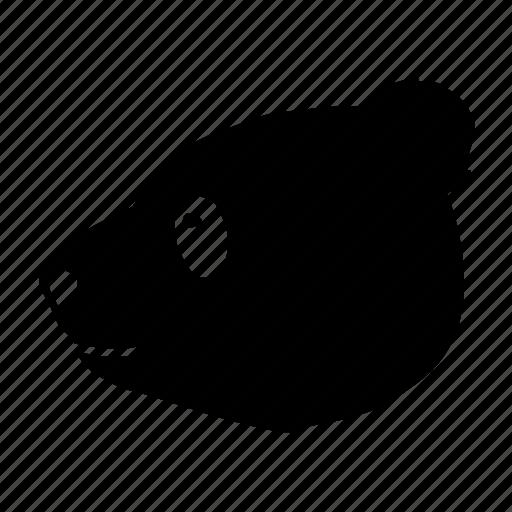 animal, bear, panda, zoo icon