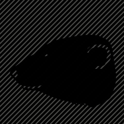 animal, artic, bear, polar, zoo icon