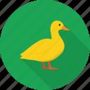 animal, bath, bird, duck, toy