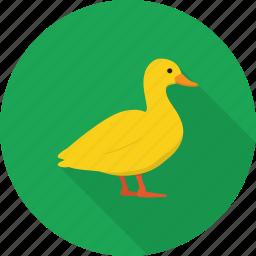 animal, bath, bird, duck, toy icon