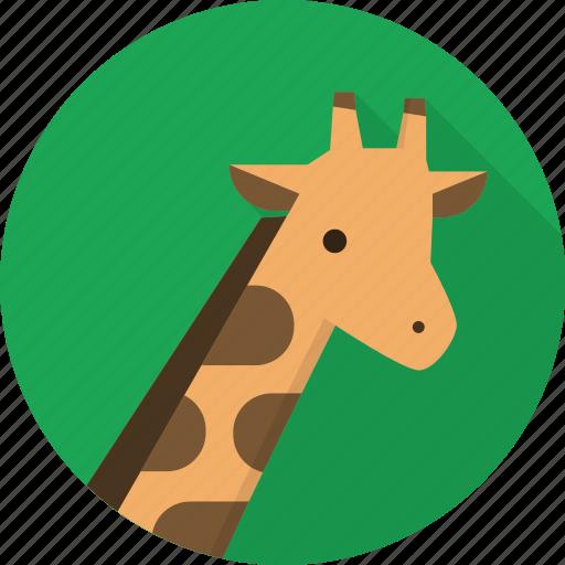 africa, animal, giraffe, wildlife, zoo icon
