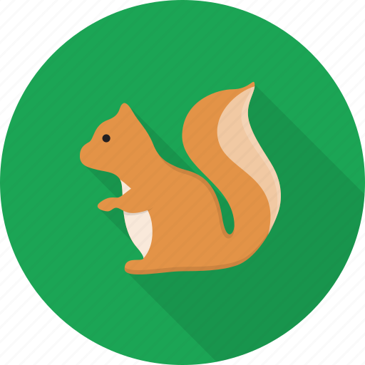 animal, nuts, rodent, squirrel, wild icon