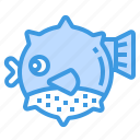 blowfish, animal, fish, ocean, wildlife