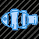 clownfish, animal, ocean, aquatic, fish