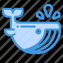 whale, ocean, animal, aquatic, mammals