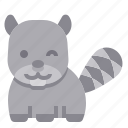 raccoon, animal, zoo, mammal