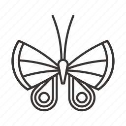 batterfly, beauty, butterfly, insect, nature, wings icon