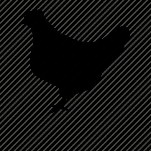 bird, chicken, farm, farm animal, poultry icon