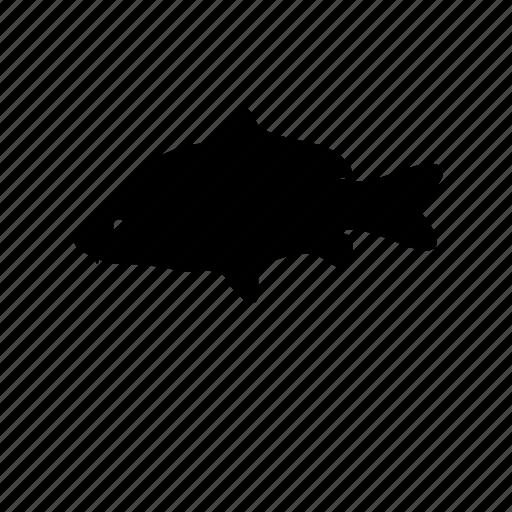 carp, carp fishing, fish, fishing, wildlife icon