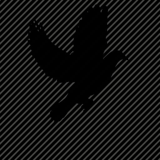 animal, bird, death, dove, flying icon