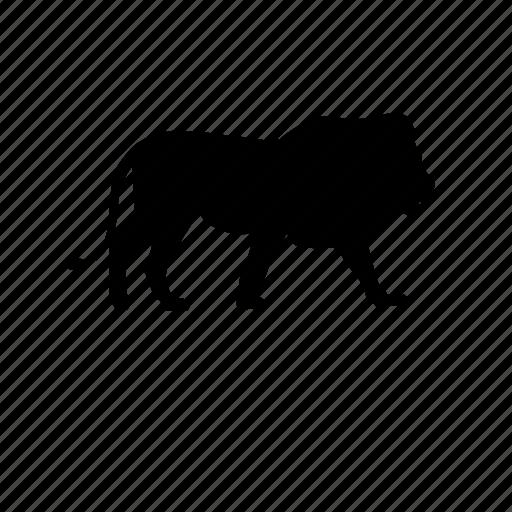 cat, hunter, king, king of the jungle, lion, safari, wildlife icon