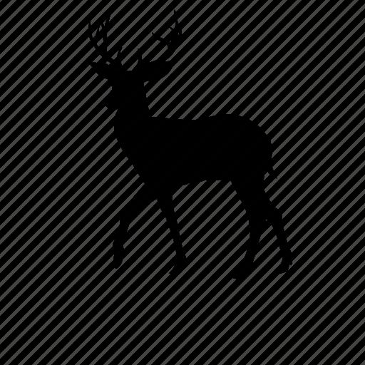 buck, deer, fauna, horns, wildlife icon