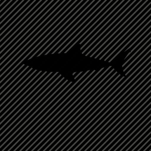 danger, fish, hunter, sea animal, shark, white shark icon