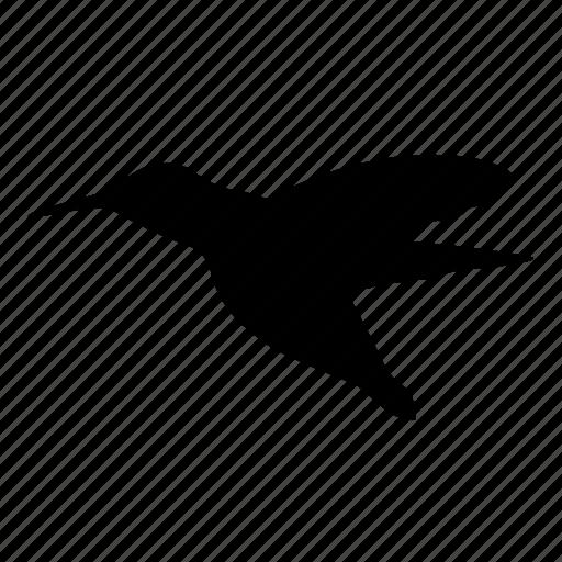animal, bird, calibri, colibri, flying, hummingbird, nature icon