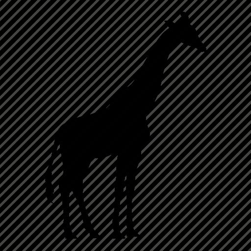 animal, giraffa, giraffe, safari, silhouette, wild, zoo icon