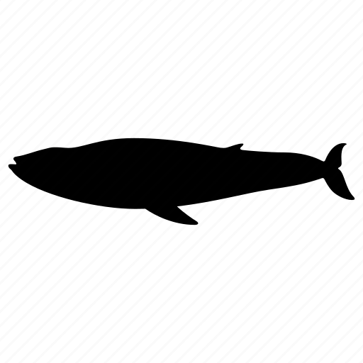animal, cachalot, mammal, ocean, silhouette, whale, wild icon