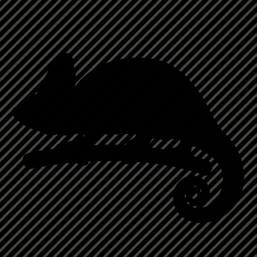animal, chameleon, change color, iguana, nature, reptile, silhouette icon