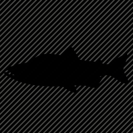 fish, fishing, humpback salmon, river, salmon, seafood, silhouette icon