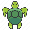 turtle, animal, animals, marine, nature, ocean, pet