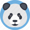 animal face, cartoon panda, panda, panda bear, panda face icon