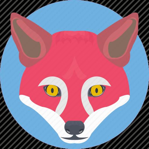 animal, coyote, fox, fox face, fox head icon