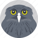 cartoon owl, owl, owl face, owl head, owl staring icon