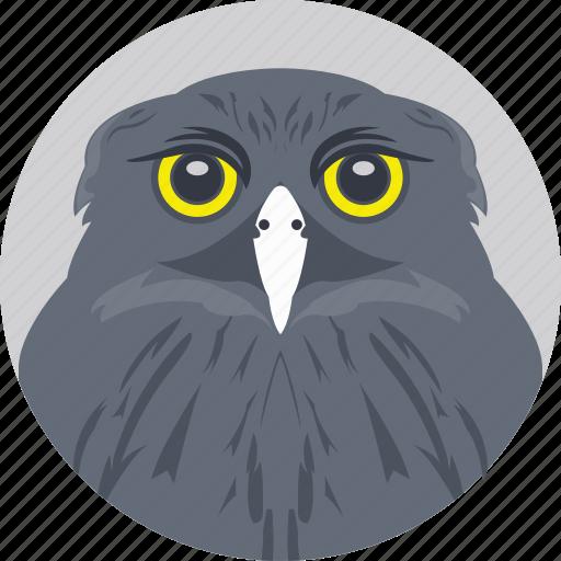 cartoon owl, owl, owl face, owl head, owl staring icon
