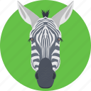 animal, horse family, zebra, zebra face, zebra head icon