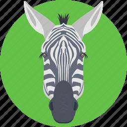 animal, horse family, zebra, zebra face, zebra head icon