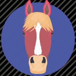 animal, cartoon horse, horse, horse face, horse head icon