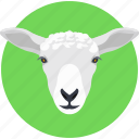 animal, goat, goat face, kid goat, young goat icon