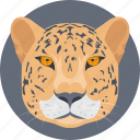 animal, tiger, tiger face, tiger head, wild animal icon