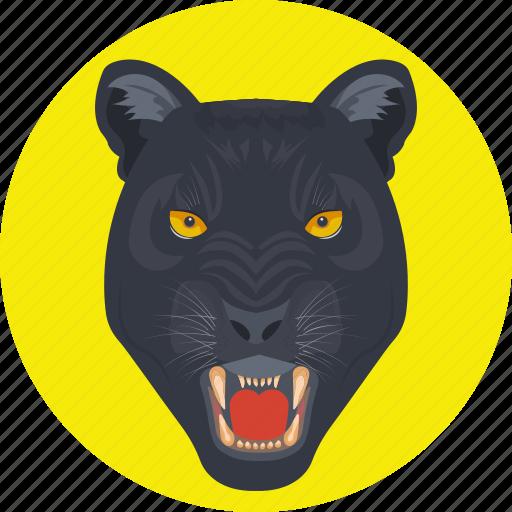 animal, leopard, lion, panthera, tiger icon