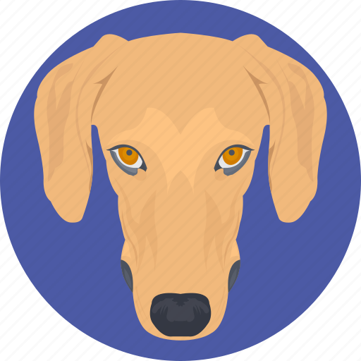 animal, basset hound, dog, dog face, dog head icon