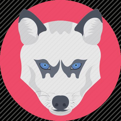 wild animal, wildlife, wolf, wolf face, wolf head icon