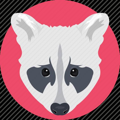animal, cartoon animal, coyote, fox, fox face icon