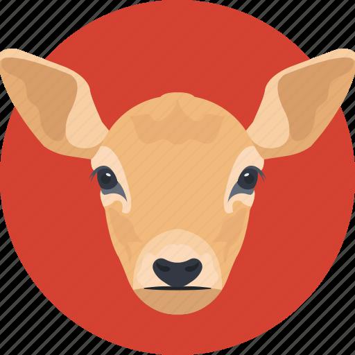animal, goat, goat face, kid goat, young goat icon