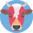cattle, cow, cow face, cow head, mammal icon