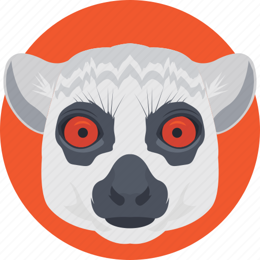 animal, bear, wallaroo, wombat, wombat face icon