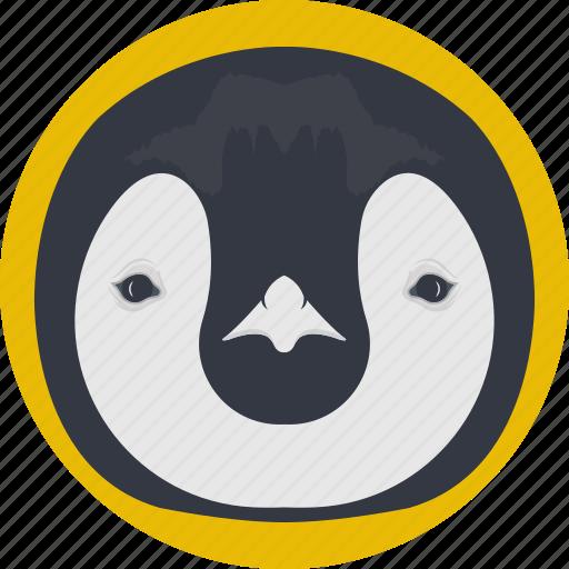 animal, auk, penguin, penguin face, puffin icon
